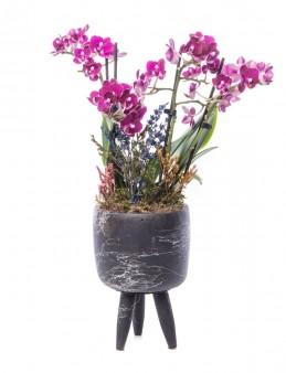 Auctore Serisi Mini Mor Orkide Tasarım Orkideler çiçek gönder