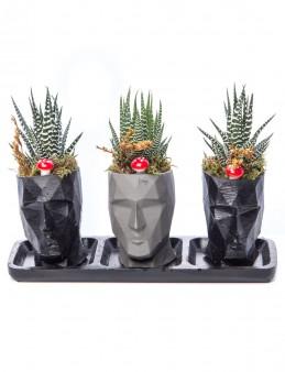 Trio Zeus Serisi Howarthia Tasarım  çiçek gönder