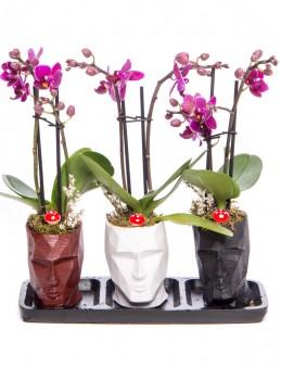 Trio Zeus Serisi Mini Mor Orkide Tasarım  çiçek gönder