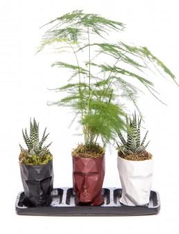 Trio Zeus Serisi Asparagus Tasarım  çiçek gönder