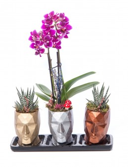 Trio Zeus Serisi Mini Mor Orkide ve Sukulent Tasarım  çiçek gönder