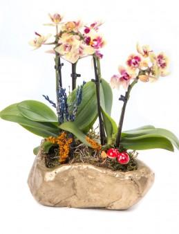 Pettam Serisi Mini Sarı Orkide Tasarım  çiçek gönder