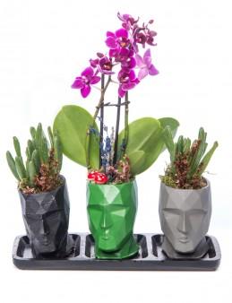 Trio Zeus Serisi Mini Mor Orkide ve Para Çiçeği Tasarım  çiçek gönder