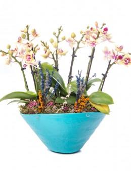 Cannae Serisi Mini Sarı Orkide Tasarım Orkideler çiçek gönder