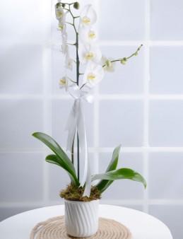Beyaz Bir Sayfa Orkide Çiçeği  çiçek gönder