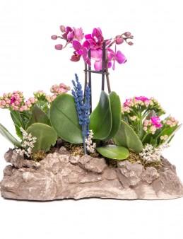 Griseo Serisi Mini Mor Orkide ve Kalanchoe Tasarım Orkideler çiçek gönder