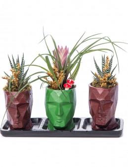Trio Zeus Serisi Tillendsia Tasarım  çiçek gönder