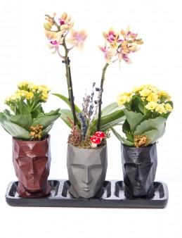 Trio Zeus Serisi Mini Sarı Orkide Tasarım  çiçek gönder