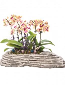 Griseo Serisi Orkide Bahçem Tasarım  çiçek gönder