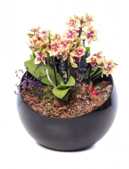 Cama Serisi Orkide Tasarım  çiçek gönder