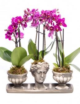 Antik Kupa Serisi Orkide Tasarım Orkideler çiçek gönder