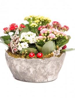 Lucenna Serisi Kalanchoe Tasarım  çiçek gönder