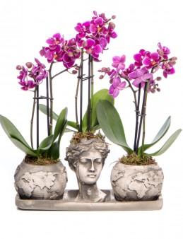 Trio Dünya Serisi Mini Mor Orkide Tasarım Orkideler çiçek gönder