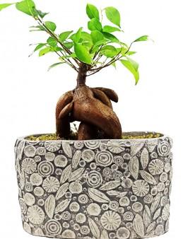 Dekoratif Motif Saksıda Ficus Bonsai  çiçek gönder