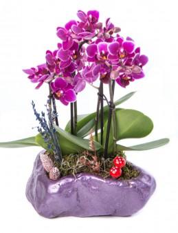 Pettam Serisi Mini Mor Orkide Tasarım  çiçek gönder