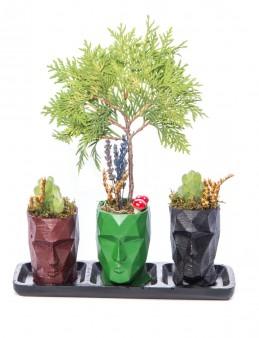 Trio Zeus Serisi Mazı Bonsai Tasarım  çiçek gönder