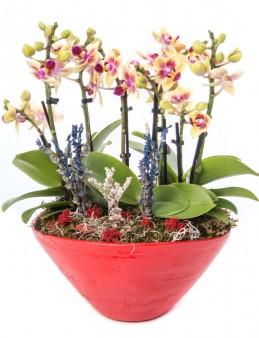 Cannae Serisi Mini Sarı Orkide Tasarım  çiçek gönder