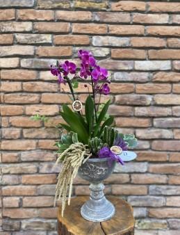 Lux Seramikte Multi Orkide Orkideler çiçek gönder
