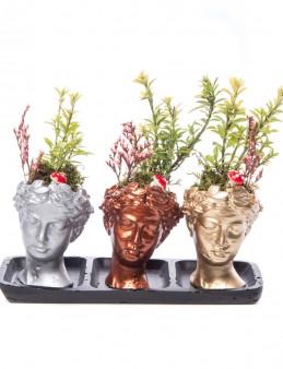 Trio Picta Hero Buxus Bonsai Tasarım  çiçek gönder