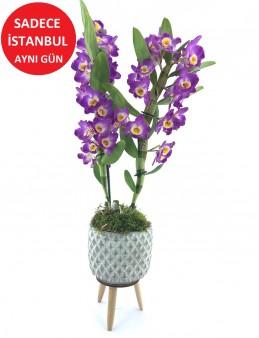 Dendroium Bambu Orkide  çiçek gönder
