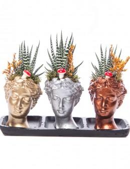 Trio Picta Hero Howarthia Tasarım  çiçek gönder