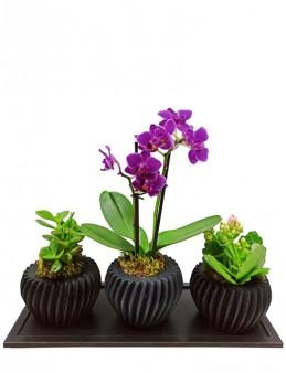 Üçlü Özel Orkide Tasarım  çiçek gönder