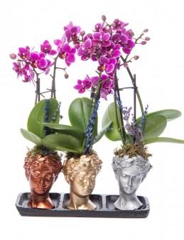 Trio Picta Hero Mini Mor Orkide Tasarım  çiçek gönder