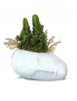 Sleeping Face Sunum Kaktüs   çiçek gönder