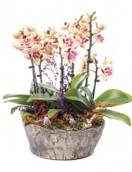 Lucenna Sarı Orkide Tasarım  çiçek gönder
