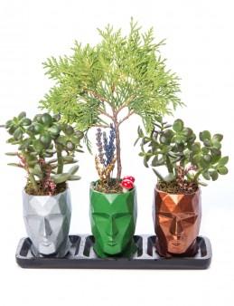 Trio Zeus Serisi Mazı Bonsai ve Para Çiçeği Tasarım  çiçek gönder