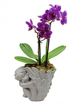 Melek Saksıda Mini Orkide Orkideler çiçek gönder