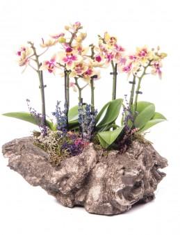 Angkor Serisi Sarı Orkide Tasarım  çiçek gönder