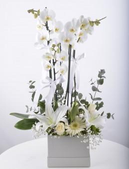 Beyaz orkideli Aranjman Çiçeği  çiçek gönder