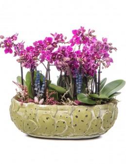 Frank Serisi Mini Mor Orkide Tasarım  çiçek gönder