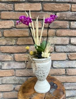 Mini Orkide Tasarım  Orkideler çiçek gönder