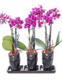 Trio Zeus Mini Mor Orkide Tasarım Orkideler çiçek gönder