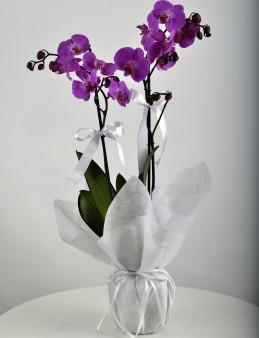 Paketli Mor Orkide  çiçek gönder