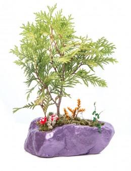 Pettam Serisi Buxus Bonsai Tasarım  çiçek gönder
