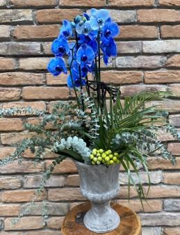 Mavi Orkide Tasarım Orkideler çiçek gönder