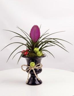 Kupa Seramikte Tilandisia Saksı Çiçeği  çiçek gönder
