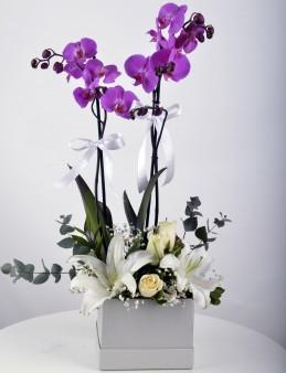 Beyaz Hediyelik Kutuda Orkide Bahçesi  çiçek gönder