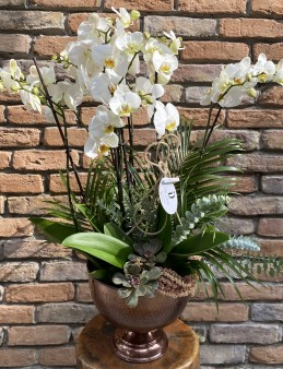 6 Dal Orkide Tasarım  Orkideler çiçek gönder