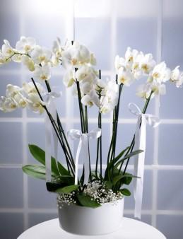 İhtişam ve Güzelliğin Buluşması  çiçek gönder