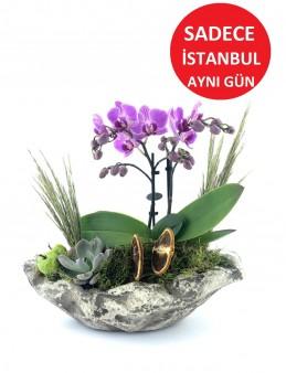 Doğa Harikası Mini Orkide  çiçek gönder