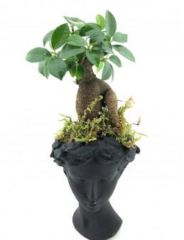 Siyah Helen de Bonsai Bitkisi  çiçek gönder