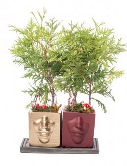 Katena Serisi Mazı Bonsai Tasarım  çiçek gönder