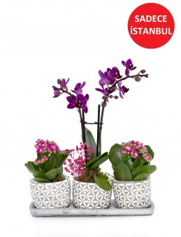Trio Plus Serisi Orkide ve Kalanchoe Orkideler çiçek gönder