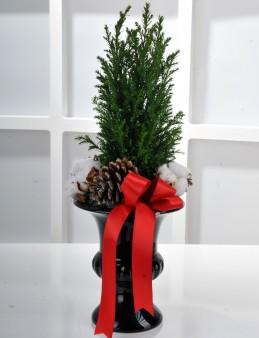 Yılbaşına Özel Minyatür Çam Ağacı   çiçek gönder