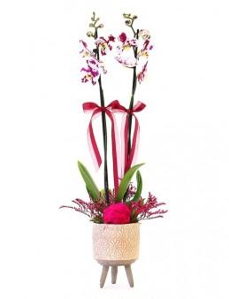 Ayaklı Desenli Vazoda Çift Dallı Orkide  çiçek gönder