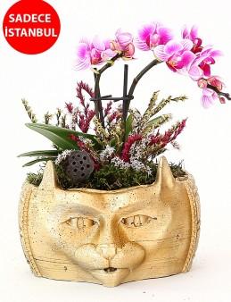 Dekoratif Kedi Tasarımlı Orkide Aranjmanı  çiçek gönder